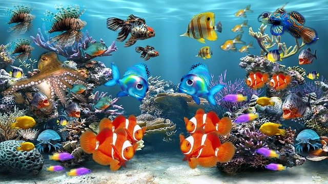 Comment déménager un aquarium ?